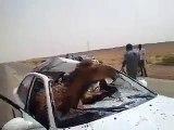 Strange road accident Camel  حادث الطريق الجمل