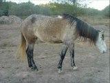 samedi 10 novembre chevaux en liberté