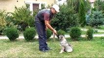 Урок №2. Как научить собаку команде сидеть / Выдержка по команде Сидеть
