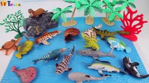 Learn Sea Animals Names For Children-Learn Sea Animals Water Animals Names And Sounds Preschool Toys