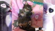 Adorable Kittens Compilation - Super Tiny and Cute Kittens Compilation 2016