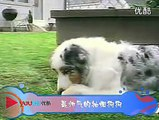 April 2013- 3 minutes of funny animals complications LOL cute, fun, fails, owned, laughs-dH2vRLM9XfE