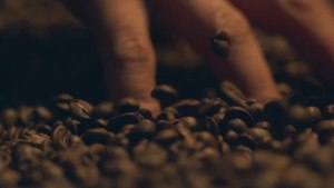 How Coffee Could Power Your Car