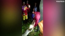 Farmer Rescued From Inside Python In Indonesia