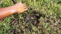 Wow! Two Boy Catch Big Crabs in the Hole by Digging - How to Catch Crab by Dig Hole?
