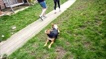FUNNY My Rabbit Shagging My Dog in the Garden