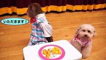【サルかに合戦はウソ?】おサルなら見ただけで甘柿と渋柿見分けられるんでしょ?(#103)