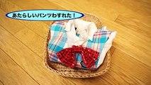 【おサルのギリギリ動画】ピンチ!お風呂あがりにパンツがない!〈賞金10万円コンテストVANCHO〉