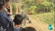 5 Shocking Animal Attacks Caught On Film! (Animal Fights Caught On Camera)