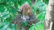 Wild birds: The life of wild baby birds in nest - bird feeding