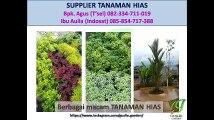 082334711019 - 085854717388 - tanaman hias indoor
