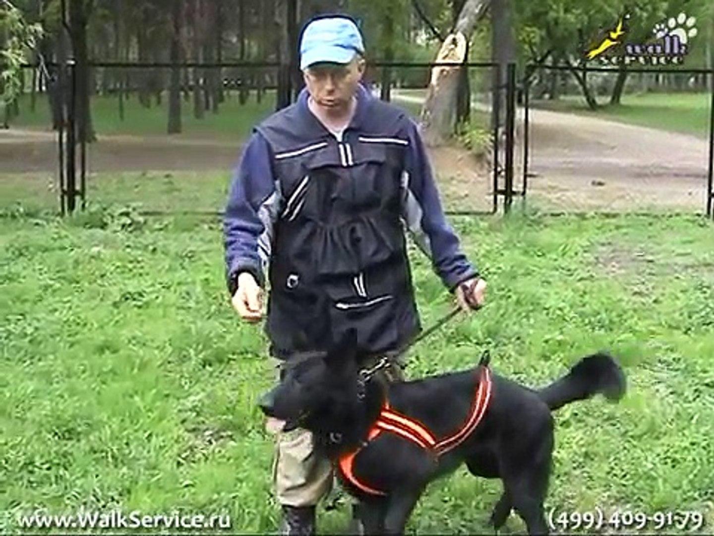 Дрессировка собак, пищевая мотивация