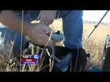 NET12 - Karya Jenius Seorang Petani di Dakota