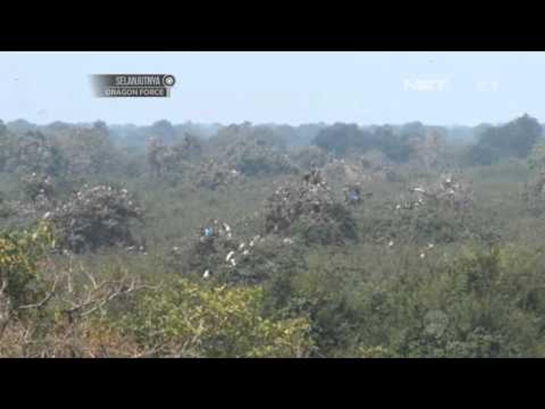 NET12 - Suaka burung di Kamboja