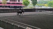 Quand tout les élèves se font jeter au sol par leurs chevaux en plein court d'équitation