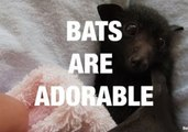 Bats Are One of the Cutest Animals Out There