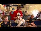 Program baca untuk anak, Anjing untuk tingkatkan kemampuan baca anak - NET12