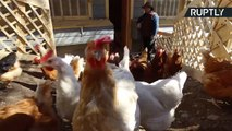 Chilean Farmers Build Egg-stravagent Coop Mansion to Keep Chickens Happy