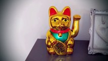 Don't watch this!  Lucky Charm Cat - Video for LUCK