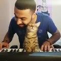 Ce jeune homme joue du piano, son chat adore !