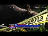 Akibat Matinya Seekor Gajah, Puluhan Gajah Liar Mengamuk dan Rusak Rumah Warga Aceh - NET24