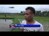 Tiga Bocah Tewas Saat Memancing Ikan di Tasikmalaya - NET24