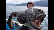 Des pêcheurs japonais attrapent un ÉNORME monstre dans la mer près du site du désastre nucléaire de Fukushima