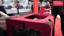 VIDEO. Plus de 2000 chiens à l'expo canine de Poitiers