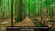 Top Tourist Attractions Places To Travel In Germany |Bavarian Forest National Park Destination Spot - Tourism in German