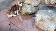 Ce chien s'est assis au mauvais endroit !