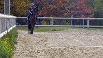 A vendre poney D Hongre fils de quality bois Margot Cso CCE dressage