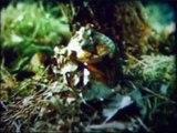 Лес и его значение. Учебный фильм по ботанике