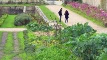 A Versailles, les mécènes au chevet du potager du roi