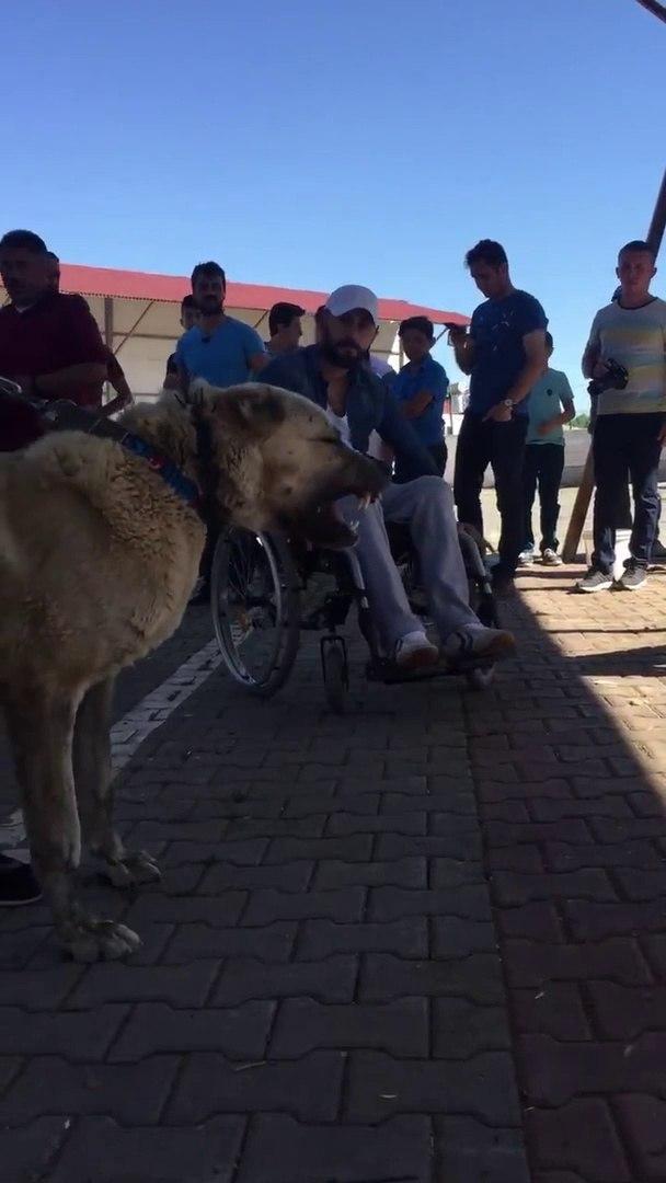 KANGAL KOPEKLERi ATISMA - SiVAS KANGAL DOG VS