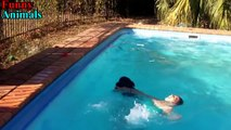 Dogs saves owner and save people from drowning Compilation