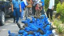 101 pangolins saisis par la police indonésienne