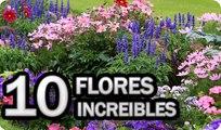 10 Flores Esenciales En Todos Los Huertos o Jardines || La Huertina De Toni