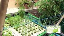 Urban Farming Homsteading, Aquaponics Philippines, MADE Growing Systems July new Update
