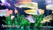 Learn Sea Animals Name | Pets for kids | Top Fish Pets Nursery Rhymes For Kids | HandplayTV Animals