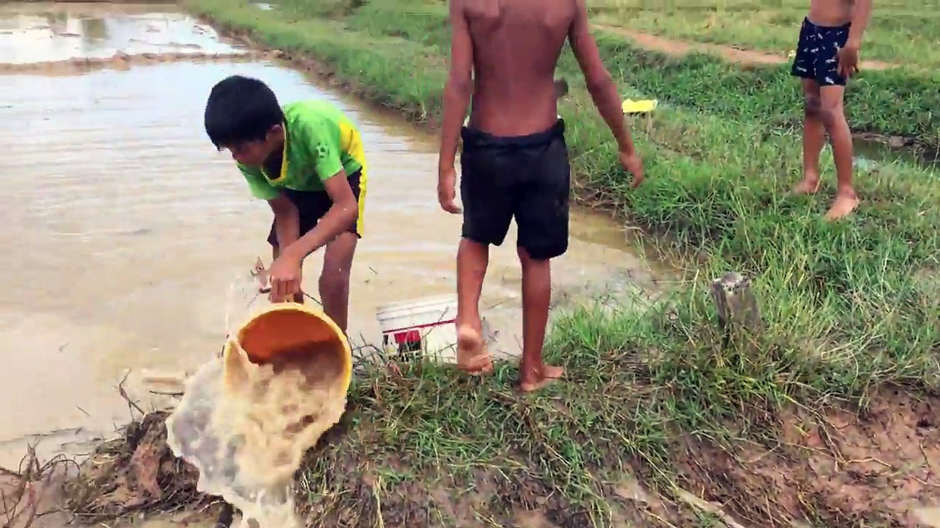Amazing Children Fishing - How To Catch Fish By Hand In Cambodia - Catch A Lot Of Fish
