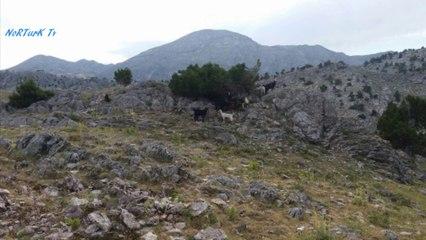 Göynem yaylaları-Toroslar,Göynem,Derebucak,Konya