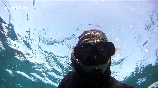 Terrifying encounter with a great white shark