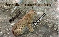 Les animaux en farandole: saison 2: épisode 4