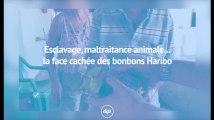 Maltraitance animale, esclavage... La face cachée des bonbons Haribo