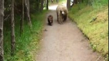 Somebody goes walk the dog, somebody grizzly mom with her cubs...