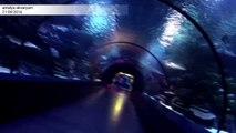 Dünyanın en güzel ve en büyük akvaryumu, antalya akvaryum