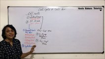 Cell Cycle & Cell Division - Cell Cycle - Part 1