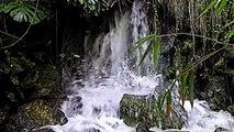 RELAXING WATERFALL - Relaxing hypnotic waterfall in bamboo forest. Wasserfall 滝 睡眠 薬