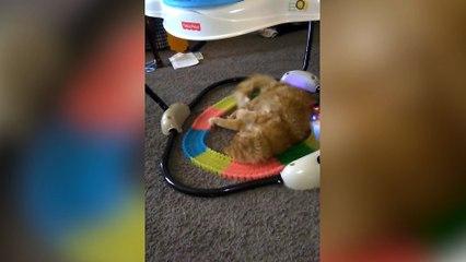 Cat DESTROYS Toy Train