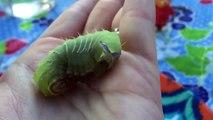 DANIEL TIGER Toy Finds a Big Green CATERPILLAR Camping!-Jqkwq6lkjdI